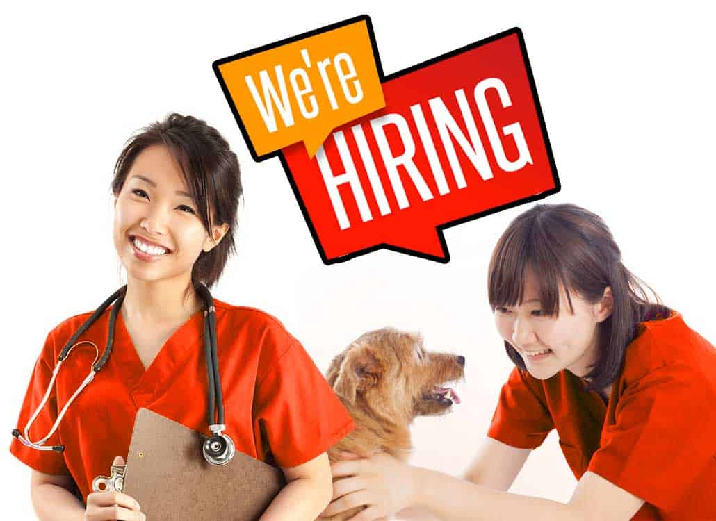 veterinarian nurse physiotherapist hydrotherapist jobs singapore ccrt ccrp ccri certified canine