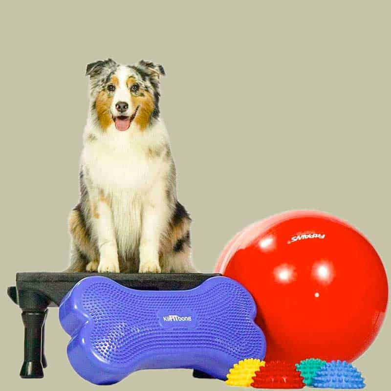 canine dog cat pet rehabilitation physiotherapy Proprioception therapeutic exercises handicapped dogs singapore