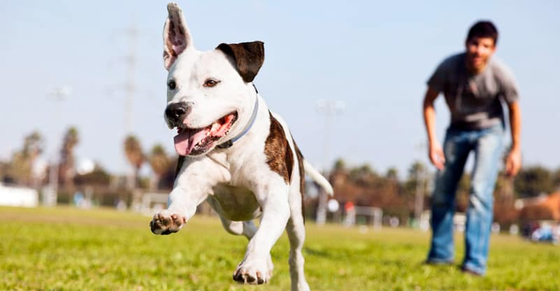 The Importance of Canine Physiotherapy