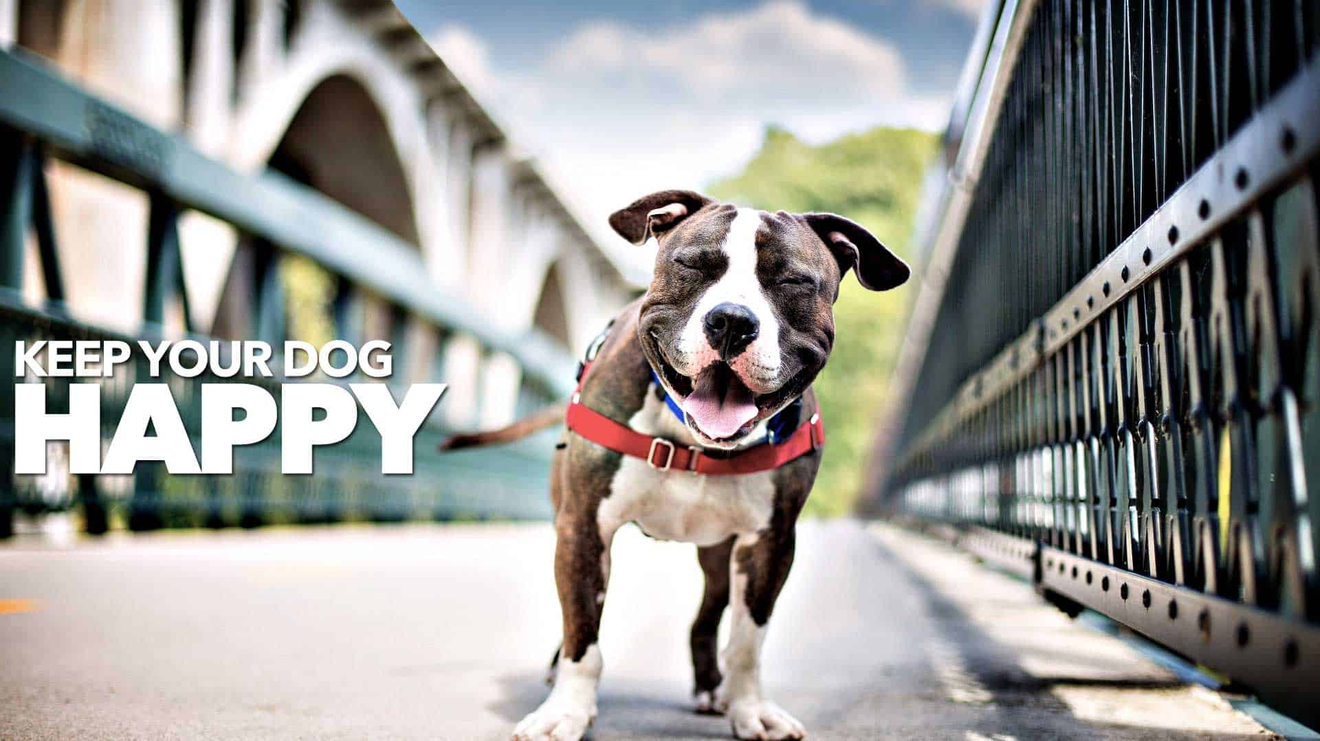 keep your dog happy