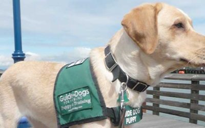 Singapore Guide Dogs